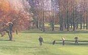 Barnham Broom Golf Resort - Norwich - Golf