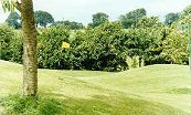 Sapey Golf Club - Upper Sapey - Golf