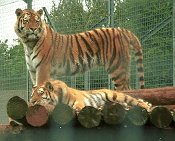 South Lakes Wild Animal Park - Dalton-in-Furness - Zoo